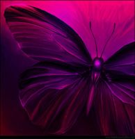 Butterfly 08 by inventivedreams