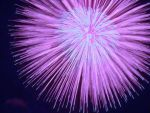 James-sahn-firework-flower by jamessahn