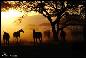 Sunset in the Dust I by Foxfire-Z