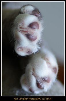 Old Paws by KSPhotographic