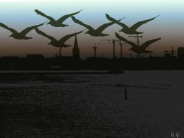 Flight of the seagulls by Rondo2009