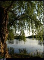 The Willow by JJM1981
