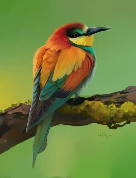 2 Hour Bird Study #2 by Tokoldi