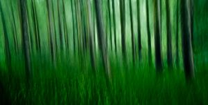 forest in motion by DomWills