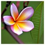 Tropical Reminiscence by acutely