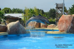 Dauphins by MissLolitaPunk