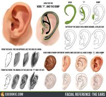 Facial Reference: The Ears by CGCookie