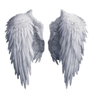 Angel wings stock PNG by Shadow-of-Nemo