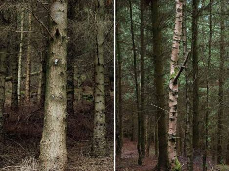 Trees 02 by GeorgePowell