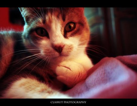 Curiosity by ClairutPhotography