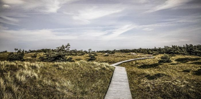 Lonely Path by Life-For-Sale