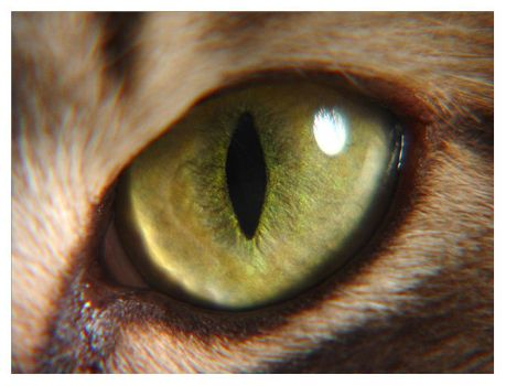 Cats Eye by sixthsystem