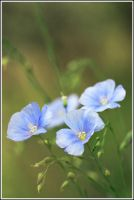 flowers by Viand