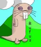 rufus by hero-of-time