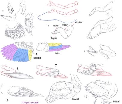 Folded Bird Wings by keaalu