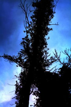 Trees In a Blue Sky by SynLove170