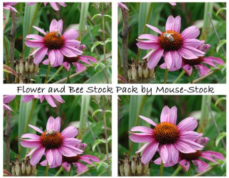 Flower and Bee Stock Pack by Mouse-Stock