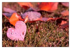 My Love for Nature by TeaPhotography