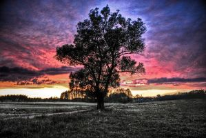 ...The Lonely Tree... by ag90