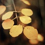 Fall by AmbersPhotos