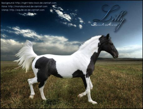 Lilly Manip by Equifever