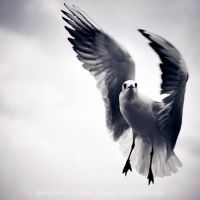 against the wind by prismes
