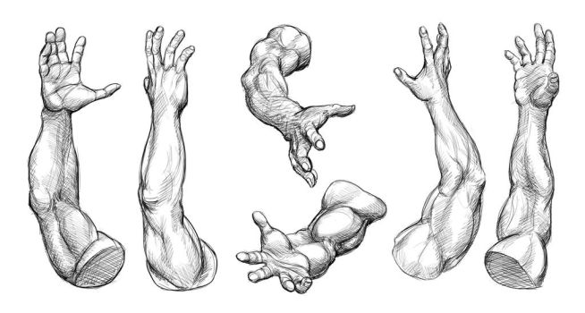 Arm Studies (Male) by Temiree