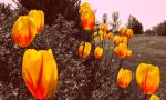 Allergy Season by Mobis-New-Nest