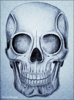 The Human Skull by RicGrayDesign