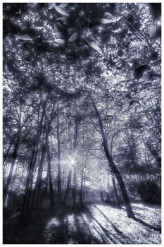 Enchanted Forest by aquapell