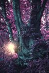 The Living Forest by JustinDeRosa