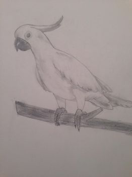 Cockatoo by AlliEggroll