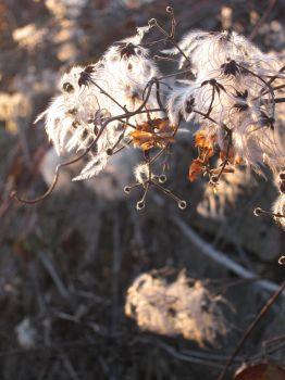 Winter plants by tipoons