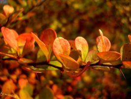 Colors of nature by moonik9