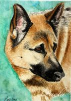 German Shepherd ACEO by skippypoof