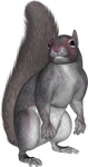 Sitting Squirrel PNG by PVS by pixievamp-stock
