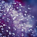 Winter in my soul by Karisca