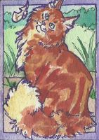 Maine coon ACEO by jupiterjenny