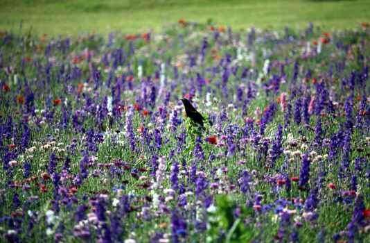 Bird Among Flowers by MoozieBerry