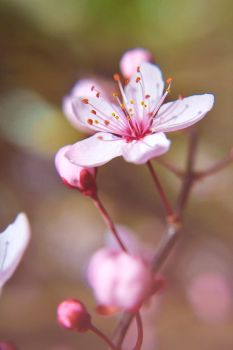 Spring in the air by AdrianaFilip
