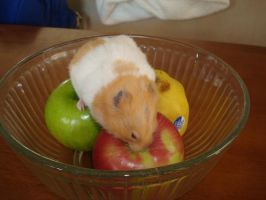 Hamster and a Fruit Bowl by singovermyradio