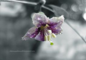 Goji Berry Flower by PanosPS