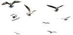 Cut-out stock PNG 45 - seven flying seaguls by Momotte2stocks