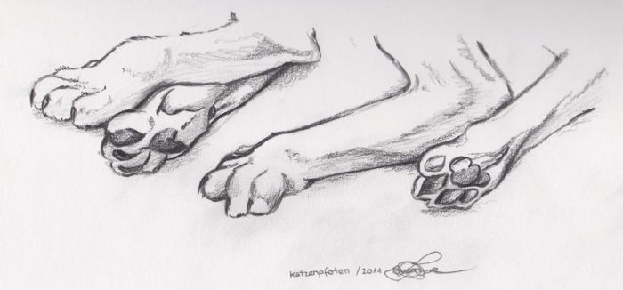 Paws by Dessi-Goes-Gothic