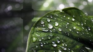 Close-up leaf HD, for PS3 by sunnybacon
