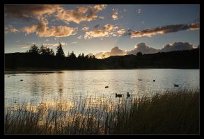 Before Ducks Go To Sleep by Fishermang