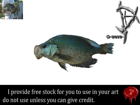 Fish stock by Prince-of-airbrush