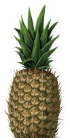 Pineapple 1 by Succubeth