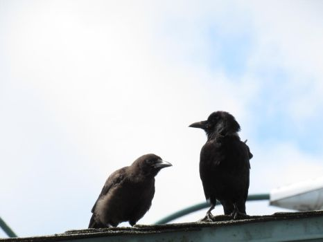 3# Crows Brothers by HeitorSatlerMacedo