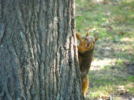 Cute Squirrel by tabography